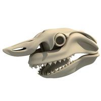 great white shark skull skeleton max