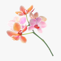 3d c4d orchid laying -