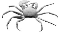 free scan ghost crab 3d model