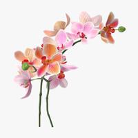 orchid - c4d