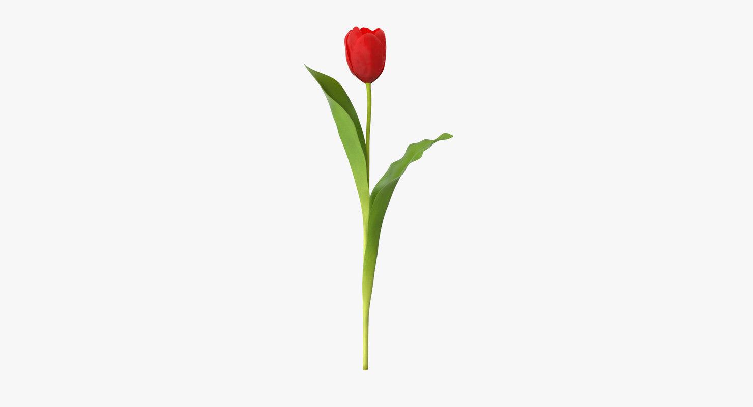 tulip single standing 3d model