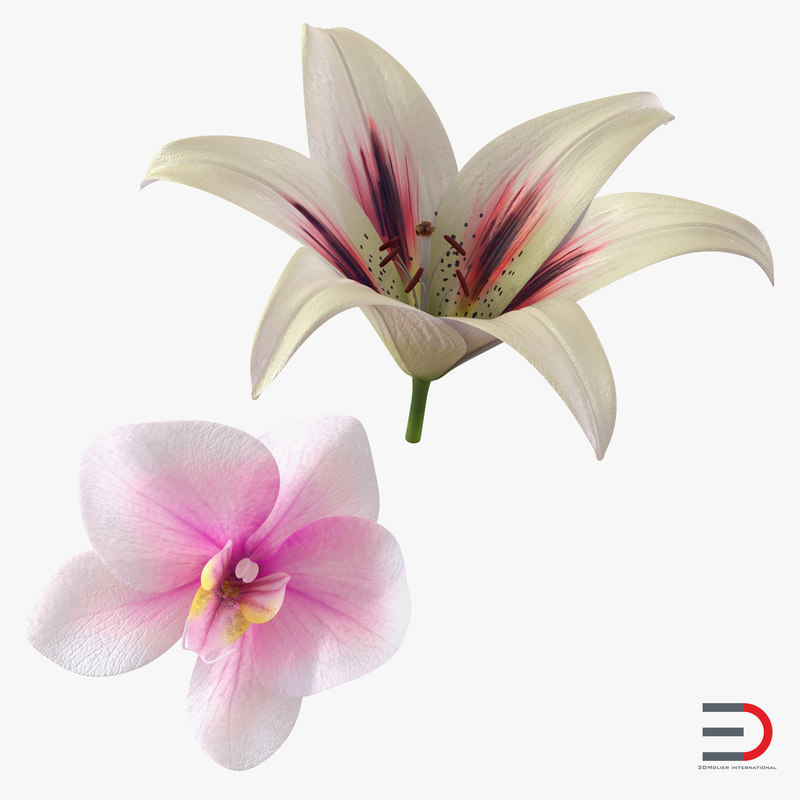 flowers set orchid max