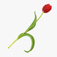 red tulip - single 3d model
