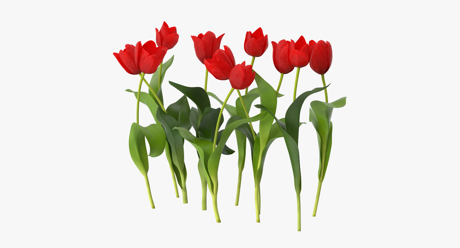 tulips red - grouped 3d max