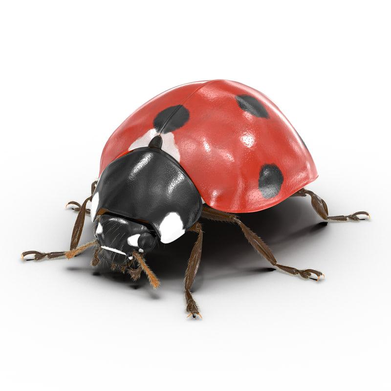 3d ladybug fur