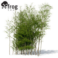 XfrogPlants Golden Bamboo