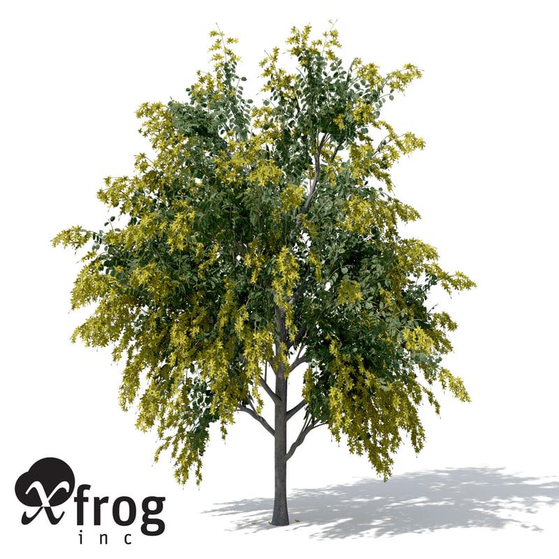 golden shower tree plant 3d obj
