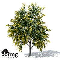 golden shower tree plant 3d obj