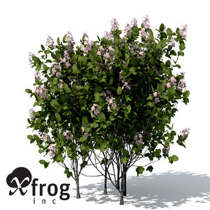 3d model quince trees