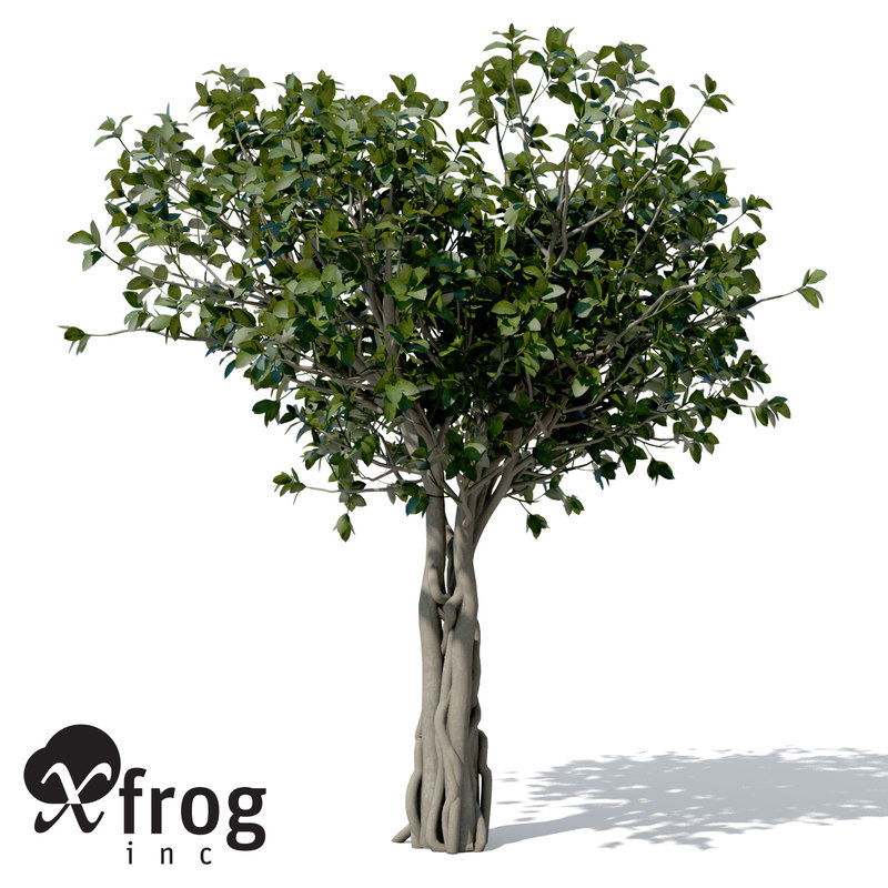 banyan trees 3d model
