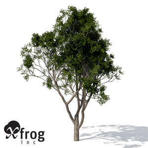 3d chinaberry tree model