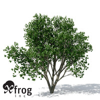 persian ironwood tree 3d model