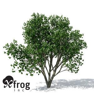 persian ironwood tree 3d model