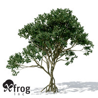 XfrogPlants Asiatic Mangrove