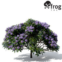 XfrogPlants Common Rhododendron