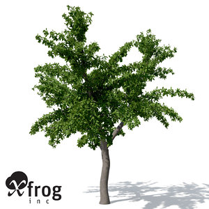 3d tropical almond tree