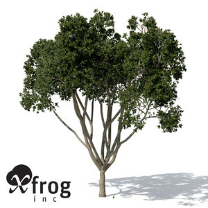 weeping fig tree plant 3d max