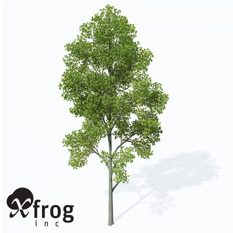 grey alder 3d model