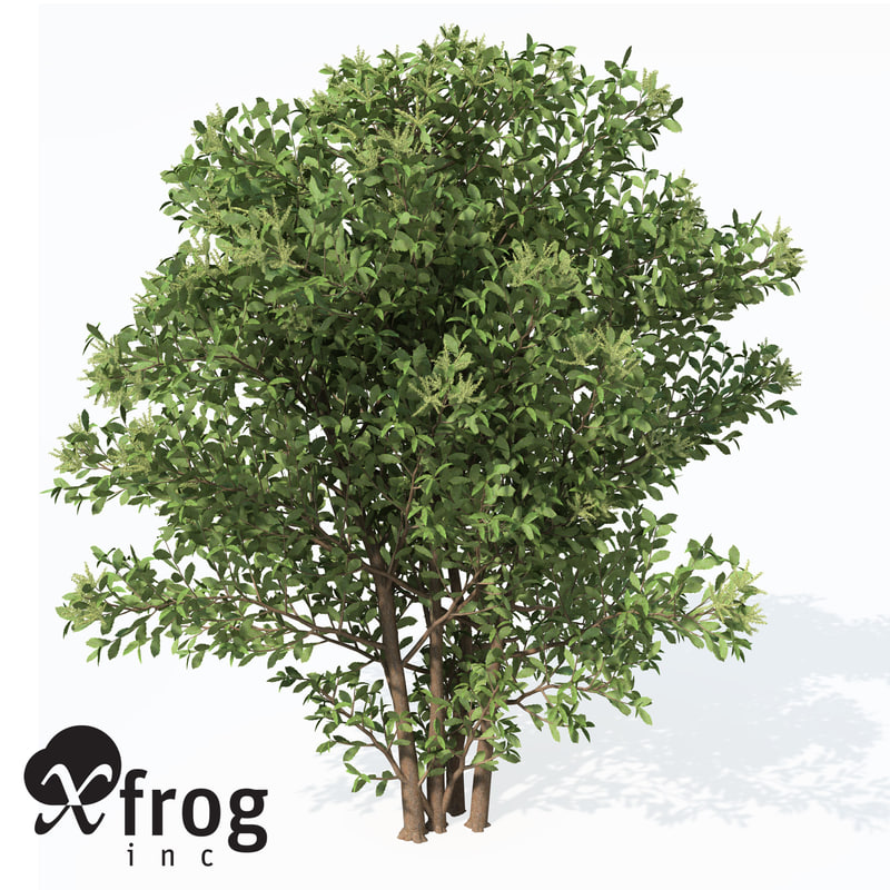 free max model chestnut castanea sativa
