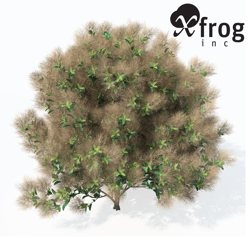 3d max european smoketree europe