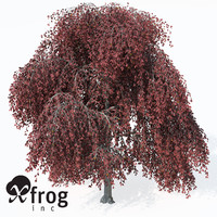 3d model weeping european beech europe