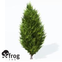 savin juniper planted 3d lwo