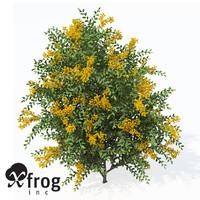 XfrogPlants Scarlet Firethorn