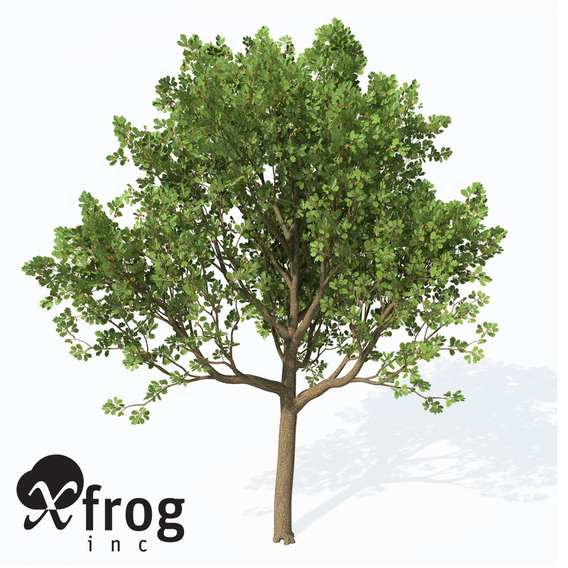 3d model downy oak trees