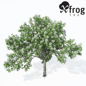 3d wild service tree planted