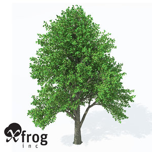 european white elm europe 3ds
