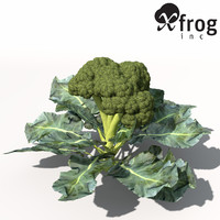 XfrogPlants Broccoli