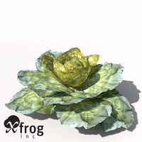 3d xfrogplants cabbage plant model