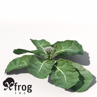 XfrogPlants Cauliflower