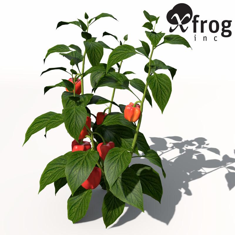 xfrogplants chili pepper plant 3d obj