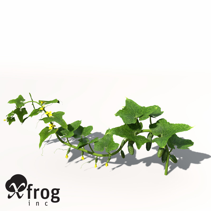 xfrogplants cucumber plant obj