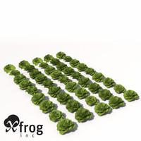 lettuce plant 3d model