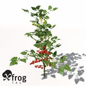 3d model xfrogplants cherry tomato plant