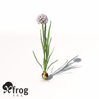 XfrogPlants Onion