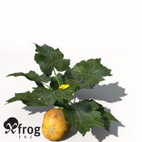 xfrogplants squash plant 3d model