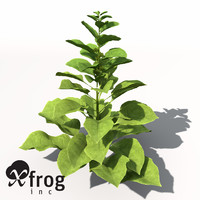 XfrogPlants Spinach
