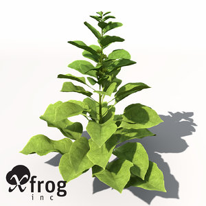 spinach plant 3d model