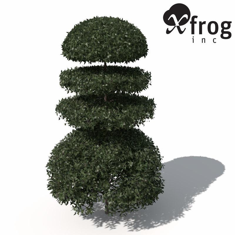 xfrogplants boxwood plants obj
