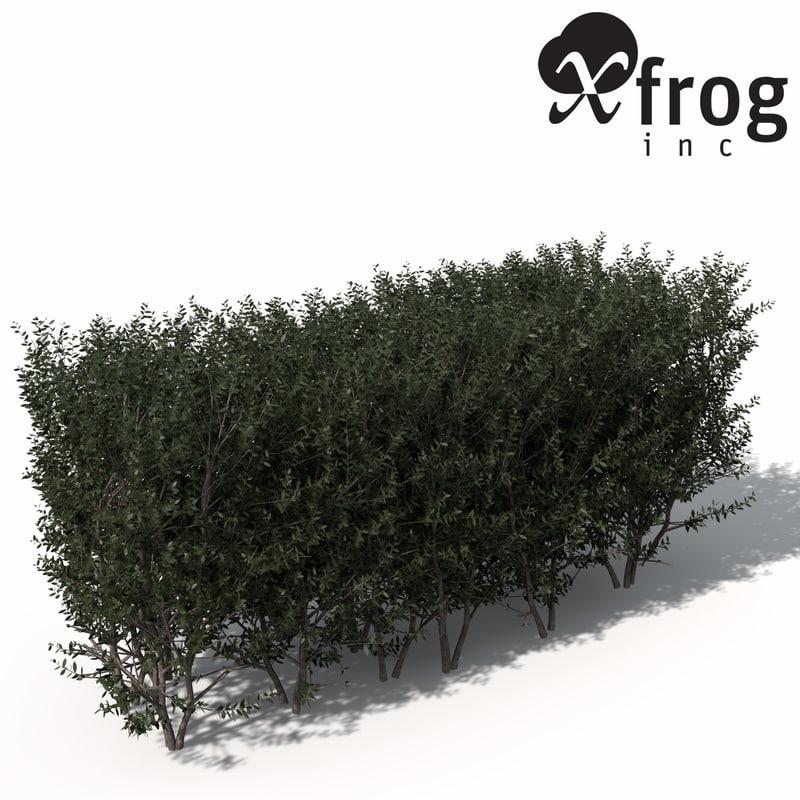 3d xfrogplants boxwood hedges plant model
