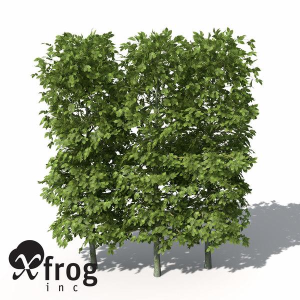 european hornbeam hedges 3d model
