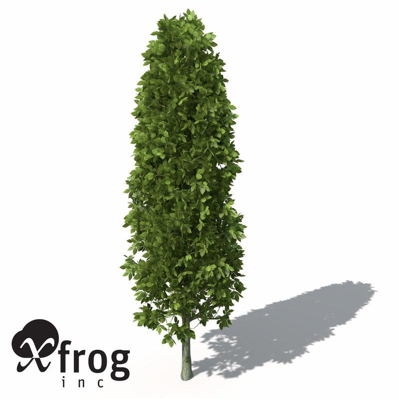 maya xfrogplants european hornbeam tree