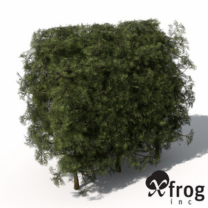 3d max xfrogplants false cypress hedges