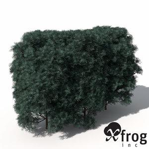 maya xfrogplants allumii false cypress