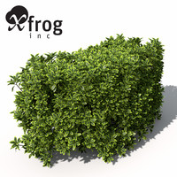 xfrogplants golden privet shrub 3ds