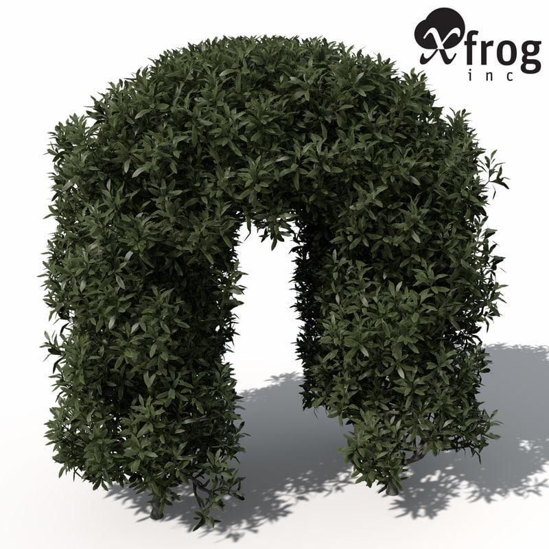3d model xfrogplants common privet