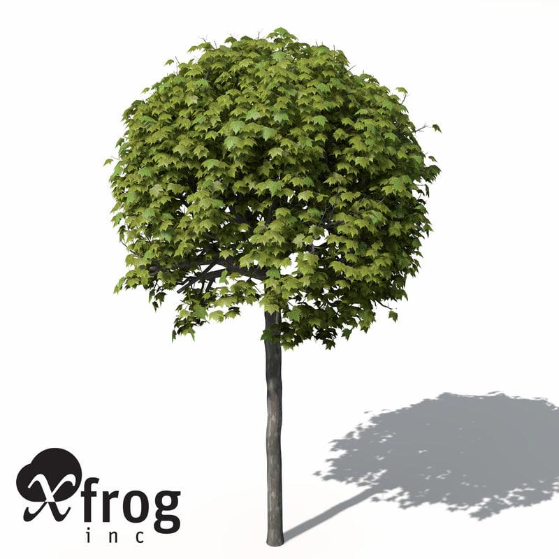 xfrogplants american planetree tree max